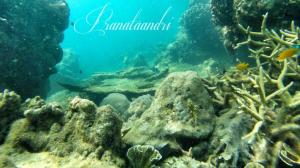 Terumbu Karang Spot Tanjungan Baja