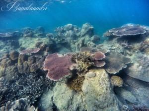 Terumbu Karang Spot Cemara