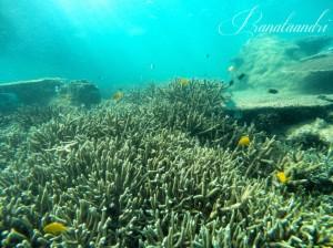 Terumbu Karang Spot Tanjungan Barat