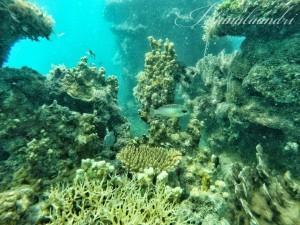 Sepenggal foto underwater Pulau Genteng