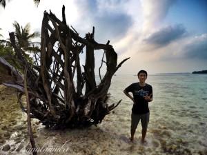 Pohon kering di sisi lain Pulau Perak