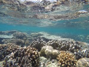Karang dangkal Pulau Putri