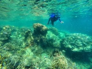 terumbu karang pulau semut img