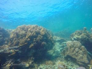 Terumbu karang Pulau Semut