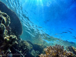 Keindahan bawah laut Spot Pulau Semut