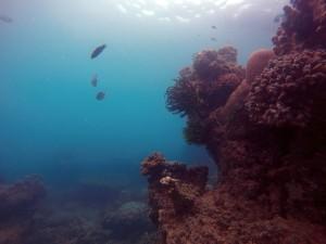 Pemandangan bawah laut gugusan Pulau Harapan