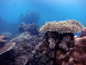 Masih sekitaran spot snorkeling yang sama
